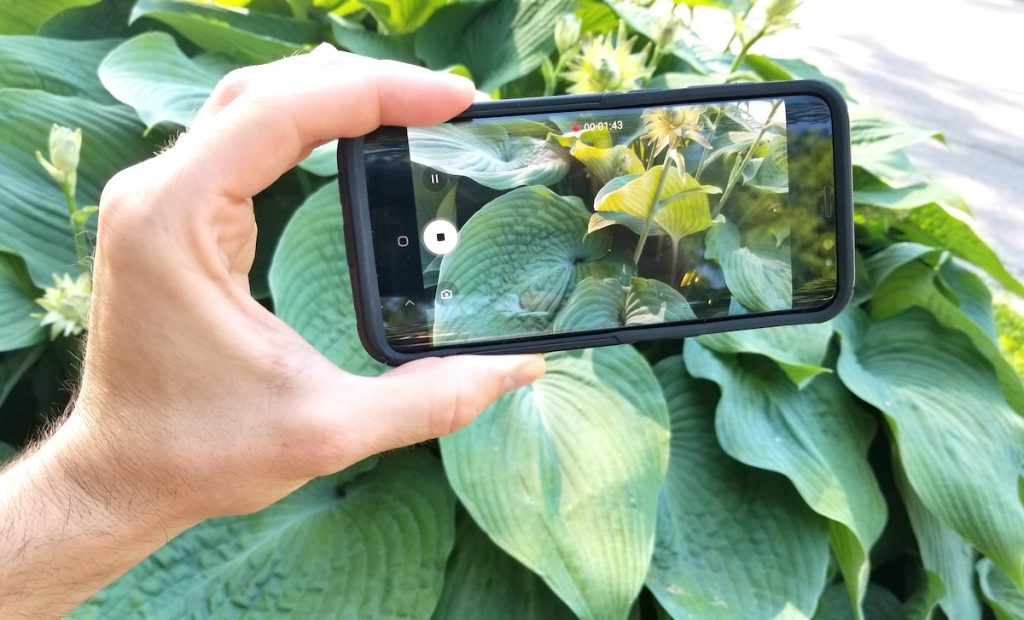 Image of a person holding their camera phone taking an image of a plant